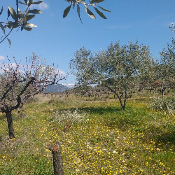 Nyons, Drôme Provençale